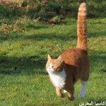 قطط ولقطات9