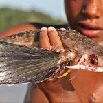 اغرب سمكة فى البحار تم اكتشاف3