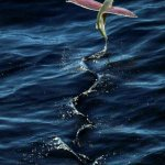 اغرب سمكة فى البحار تم اكتشاف5