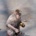 القرده :مات وليدها بين يديها 2