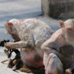 القرده :مات وليدها بين يديها 4