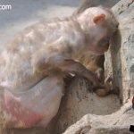 القرده :مات وليدها بين يديها 8
