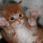 الإعجاز العلمي في القطط
