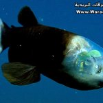 سمكه عجيبه 1