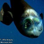 سمكه عجيبه 2