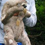 حيوان الكسلان4