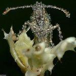 لقطات مدهشة لحشرات نائمة مغطا1