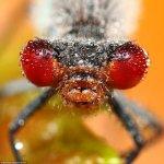 لقطات مدهشة لحشرات نائمة مغطا2