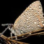 لقطات مدهشة لحشرات نائمة مغطا3