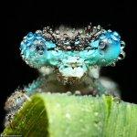 لقطات مدهشة لحشرات نائمة مغطا4