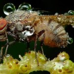 لقطات مدهشة لحشرات نائمة مغطا5