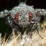 لقطات مدهشة لحشرات نائمة مغطا6