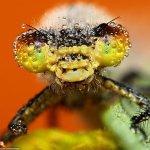 لقطات مدهشة لحشرات نائمة مغطا7