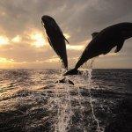 حقائق مذهلة عن الدلافين، الأر1