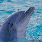 حقائق مذهلة عن الدلافين، الأر3