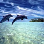 حقائق مذهلة عن الدلافين، الأر4
