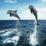حقائق مذهلة عن الدلافين، الأر7