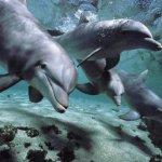 حقائق مذهلة عن الدلافين، الأر9