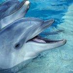 حقائق مذهلة عن الدلافين، الأر10