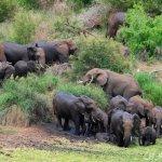 الفيل المسكين2