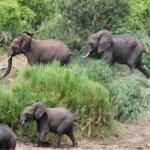 الفيل المسكين3