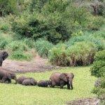 الفيل المسكين4