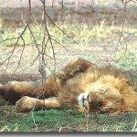 نوم الظالم عبادة
