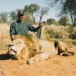Lion Size:85.40 Kb Dim: 640 x 469