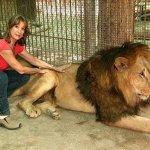 Lion  Size:72.40 Kb Dim: 620 x 400