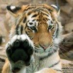 الحيوانات المفترسة12