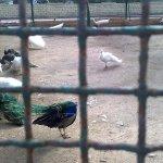 الحيوانات المفترسة3