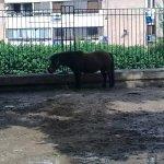 الحيوانات المفترسة4