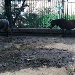 الحيوانات المفترسة5
