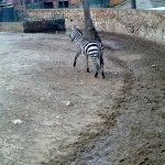 الحيوانات المفترسة1
