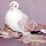طيور الزينة Size:31.70 Kb Dim: 539 x 384