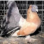 طيور الزينة Size:51.60 Kb Dim: 488 x 460