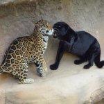 الحيوانات المفترسة2