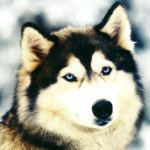 كلب Size:117.6 Kb Dim: 1024 x 768
