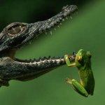 تمساح صغير Size:39.70 Kb Dim: 640 x 415