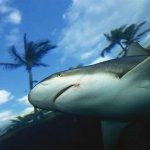 صورة نادرة لسمكة القرش