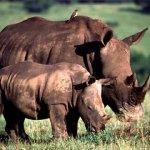 الحيوانات المفترسة7 Size:98.10 Kb Dim: 720 x 540