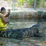 هل تتخيل ان التمساح قد يكون ح1