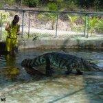 هل تتخيل ان التمساح قد يكون ح2