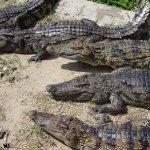 هل تتخيل ان التمساح قد يكون ح3