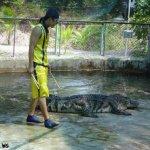 هل تتخيل ان التمساح قد يكون ح4