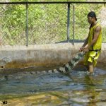 هل تتخيل ان التمساح قد يكون ح5
