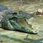 هل تتخيل ان التمساح قد يكون ح6