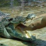 هل تتخيل ان التمساح قد يكون ح7