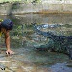 هل تتخيل ان التمساح قد يكون ح8