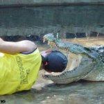 هل تتخيل ان التمساح قد يكون ح9